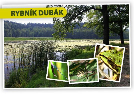 Rybník Dubák