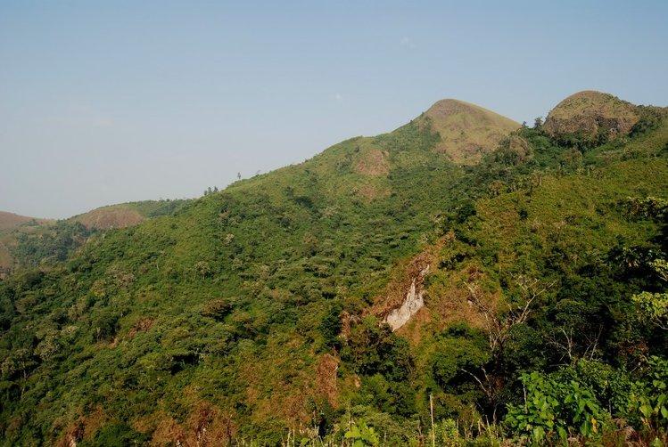 Prales_v_Kamerunu_medium