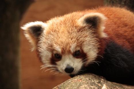 f-panda-2jpg
