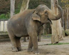 slonice