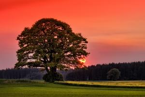 tree-at-sunset-1429336-m