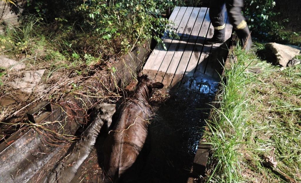 Telata spadla do nádrže s vodou, hasiči je zachránili