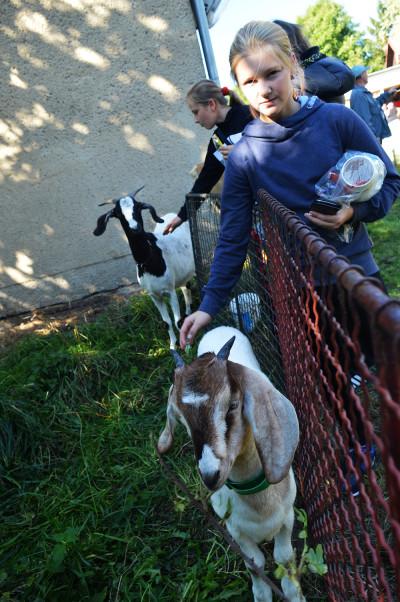 kozy vzbuzovaly zájem hlavně dětí