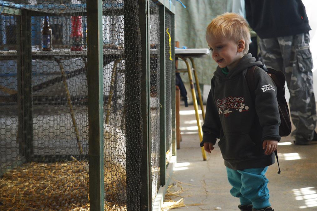 Výstavu malých zvířat ovládl králík Ferda