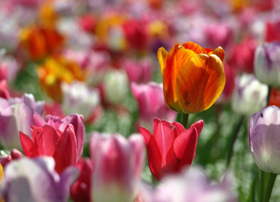 Bachovy květové esence jako prevence onemocnění