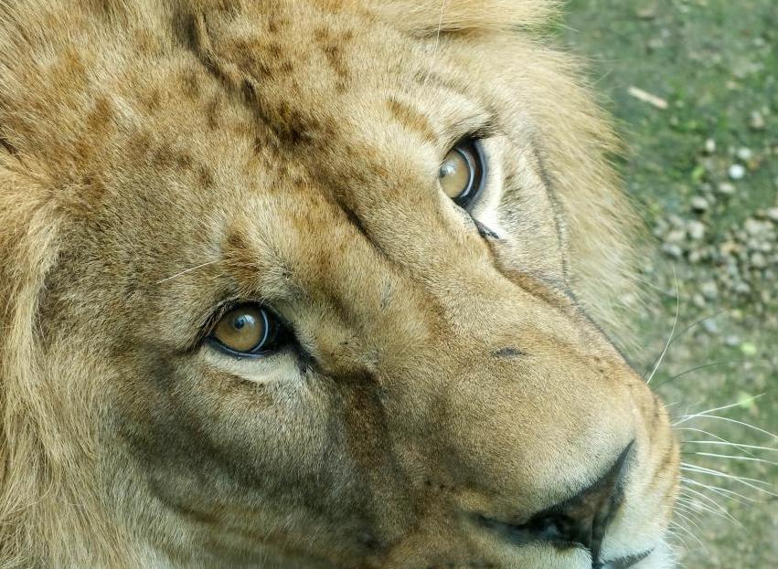 Za obrázky pro městský úřad jely frýdlantské děti do zoo