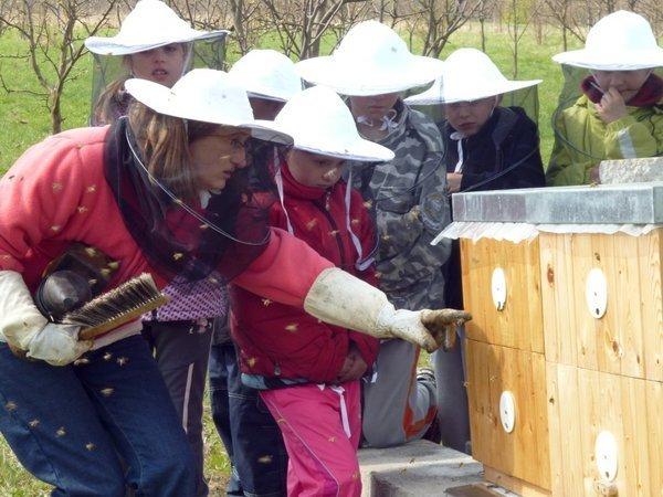 Kraj podpoří začínající včelaře