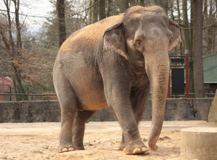 Slony netýráme! Zoo čelí útokům na facebooku