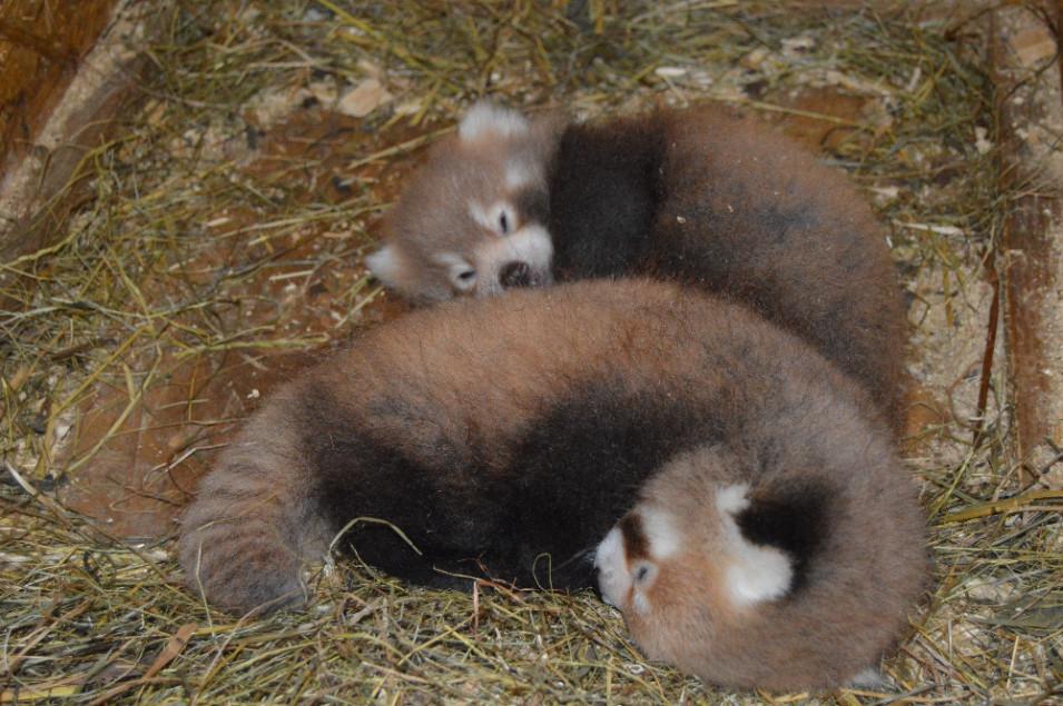 Letošní mláďata na věku 39 dní