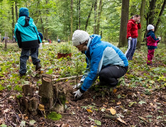 Firemní dobrovolníci pomáhali výsadbou jedlí lesům na Liberecku