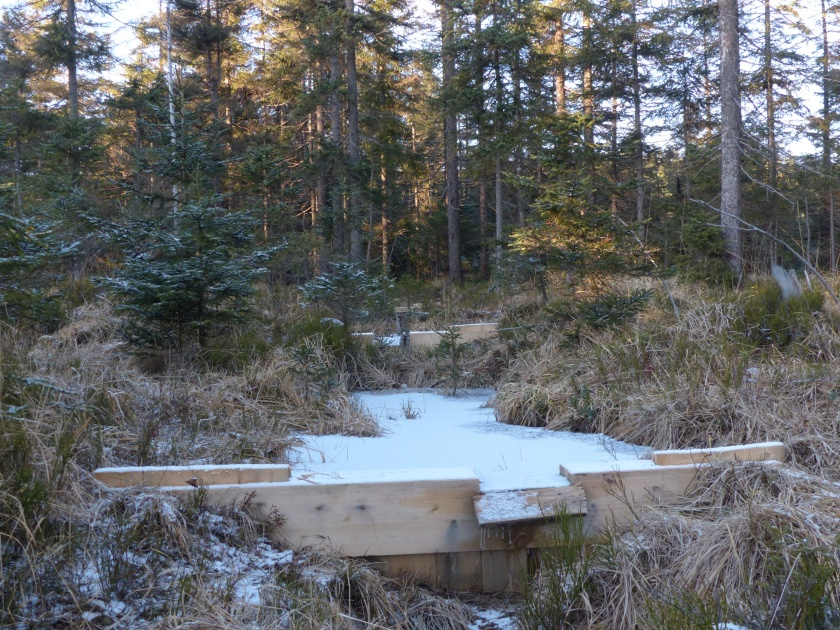 Obnova rašeliniště je z poloviny hotová