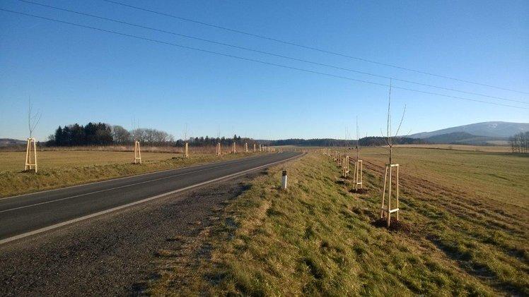 Na Frýdlantsku budou krásnější aleje, kraj na ošetření stromů získal dotaci