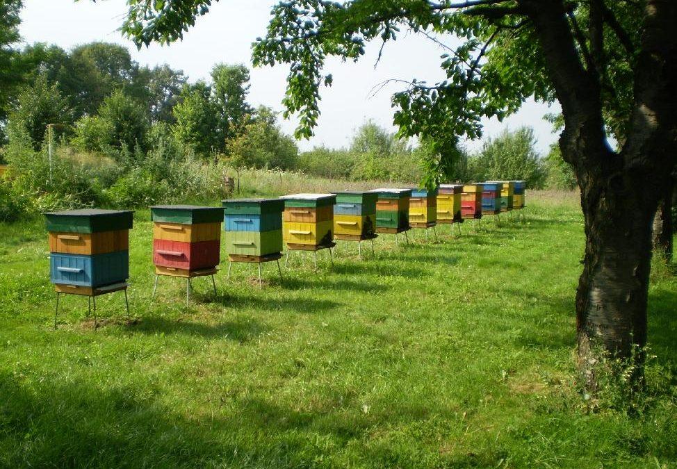 Kraj vyhlásil granty pro včelaře