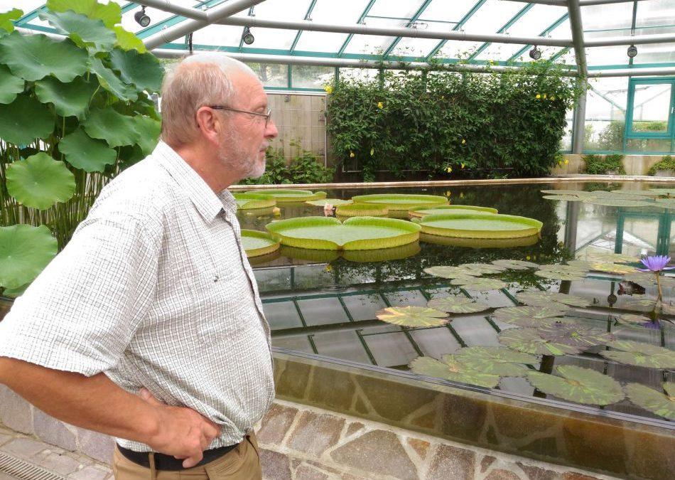 Největší lekníny světa právě kvetou v liberecké botanické zahradě