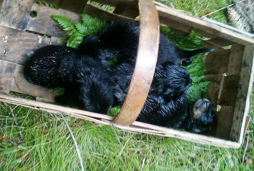 V lese na Frýdlantsku kdosi odložil svázaná třídenní štěňata, nechal je ležet v trávě