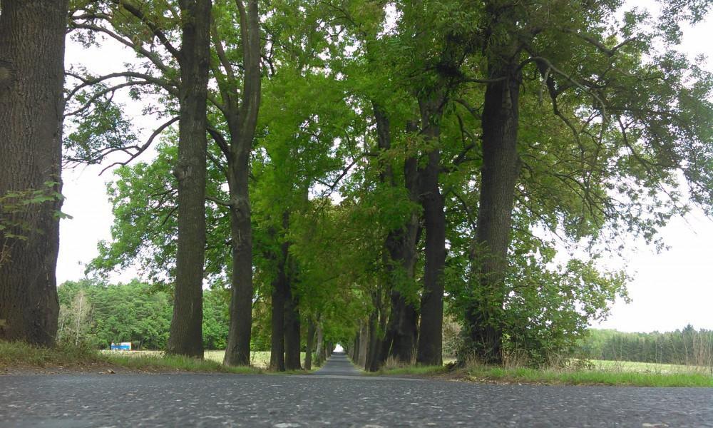 Čtyři aleje kolem silnic na Frýdlantsku se dočkají obnovy. Stromy se vrátí i na kočárovou alej