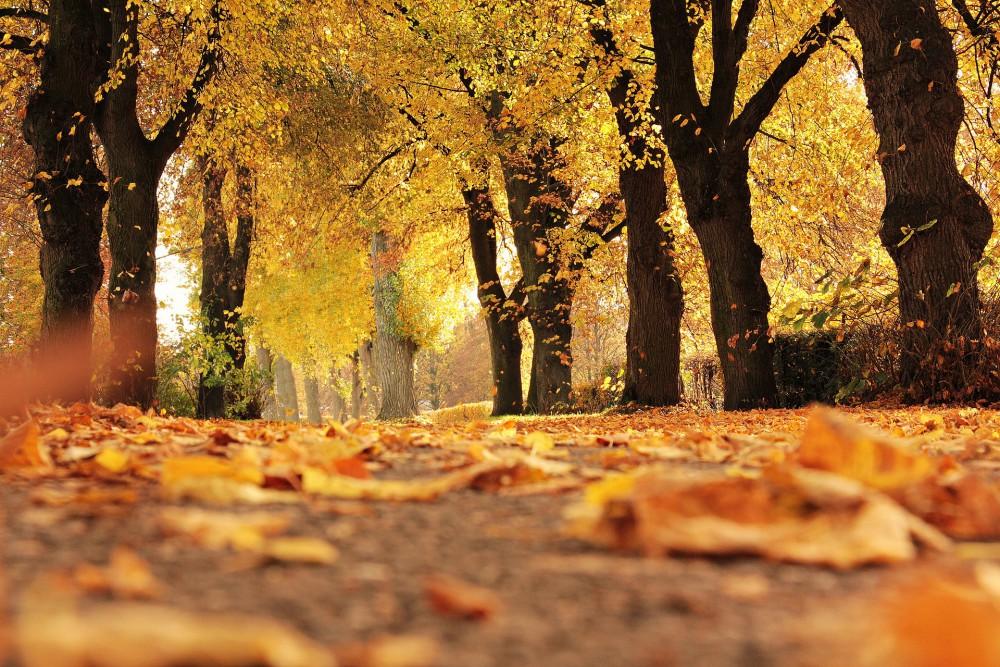 V říjnu se bude dál ochlazovat, pršet má nejvíc začátkem listopadu