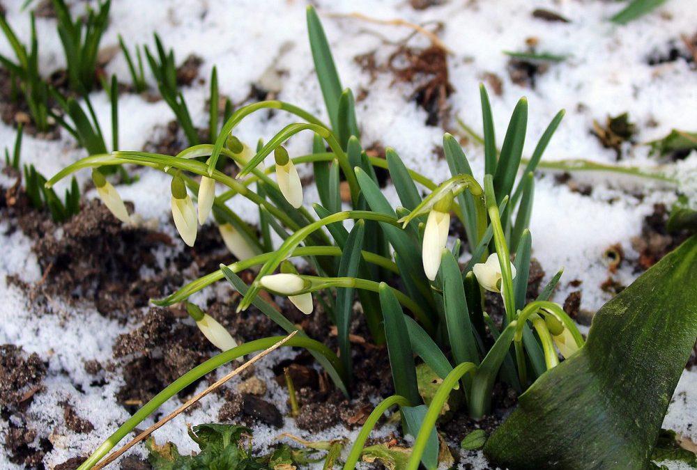 Jaro klepe na dveře. Bude se postupně oteplovat, mrazy už se nevrátí ani v noci