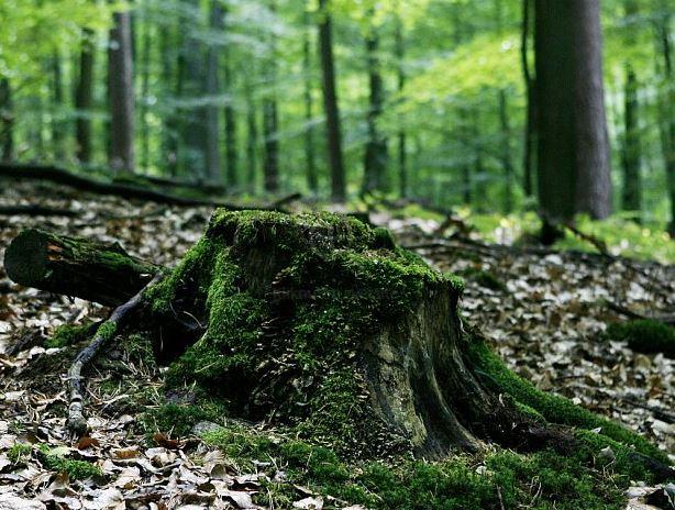 Lesníci dětem vysvětlili, o čem je práce v lese