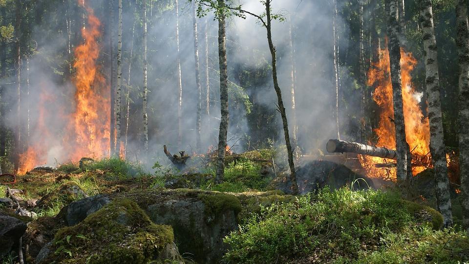 V bukovském lese u Raspenavy už nehoří. Požár v poledne uhasili