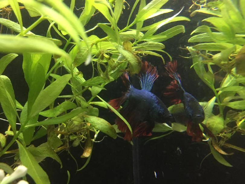 Obchod FAJN ZOO Frýdlant rozšířil sortiment o akvarijní rybičky