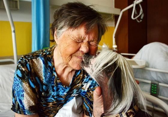 Liberecká nemocnice chce zřídit léčbu psy, pomáhají zbavovat depresí
