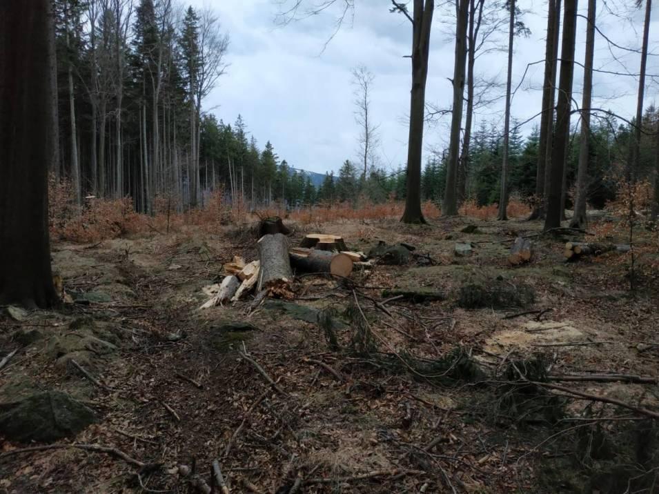 Když se v lese ztratí dřevo