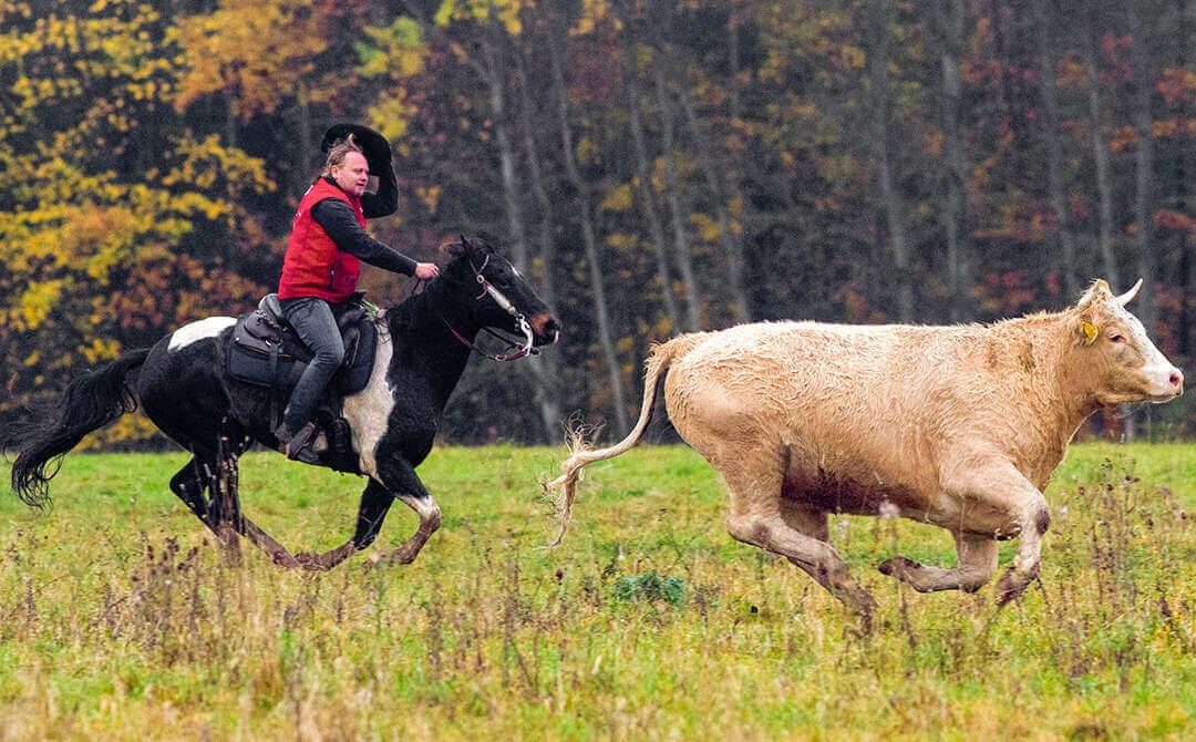 Čas od času se promění pastviny na Frýdlantsku v Divoký západ…
