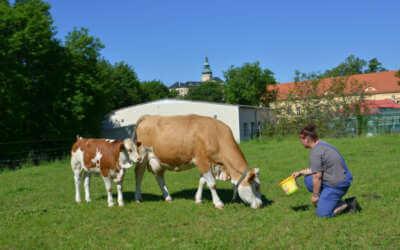 Frýdlantští studenti pěstují obilí i chmel a chovají krávy, ovce a kozy. Rádi by založili ovocnou alej či školní zoo