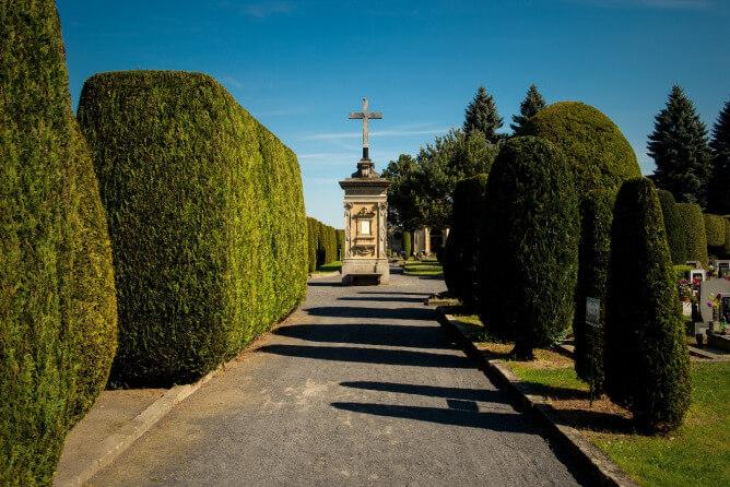 Informace o revitalizaci dřevin na hřbitově ve Frýdlantu