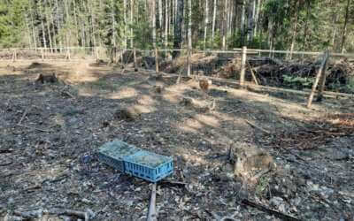 Nové stromky v Jizerkách: Zatím jsou vysoké jen pár centimetrů, jednou z nich ale bude hustý les