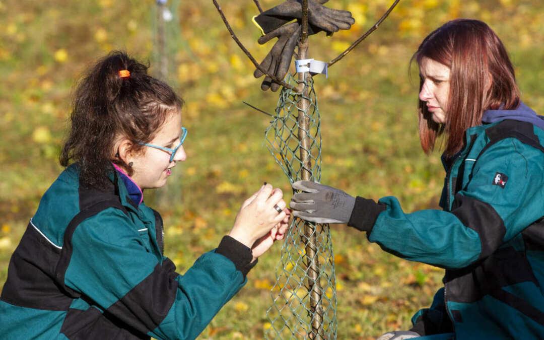Žáci SŠHL Frýdlant zasadili u naučné stezky jabloňový sad