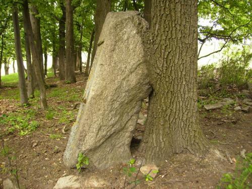 dolni-oldris-frydlantsko kameny-dolni-oldris-detail