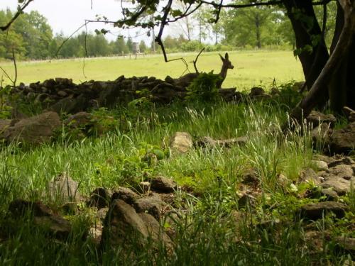 dolni-oldris-frydlantsko kameny-dolni-oldris-srnka